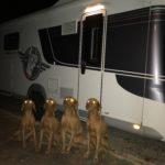 Flying_Dog_Caravan_Bratislava